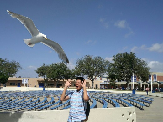 Alvin Nguyen (18') being attacked by a seagull in the FVHS bowl photo by Benjamin Minch